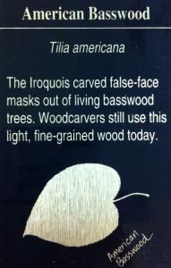AmerianBasswood