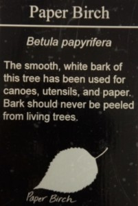 PaperBirch